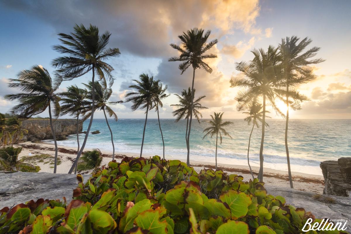 A new day BARBADOS ISLAND