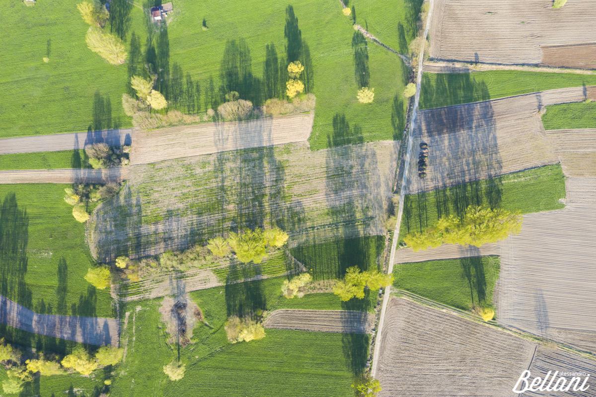 Fields in Valtellina ITALY