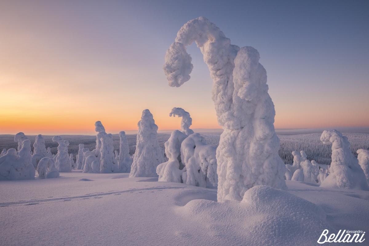Frozen sunset at Riisitunturi National Park FINLAND