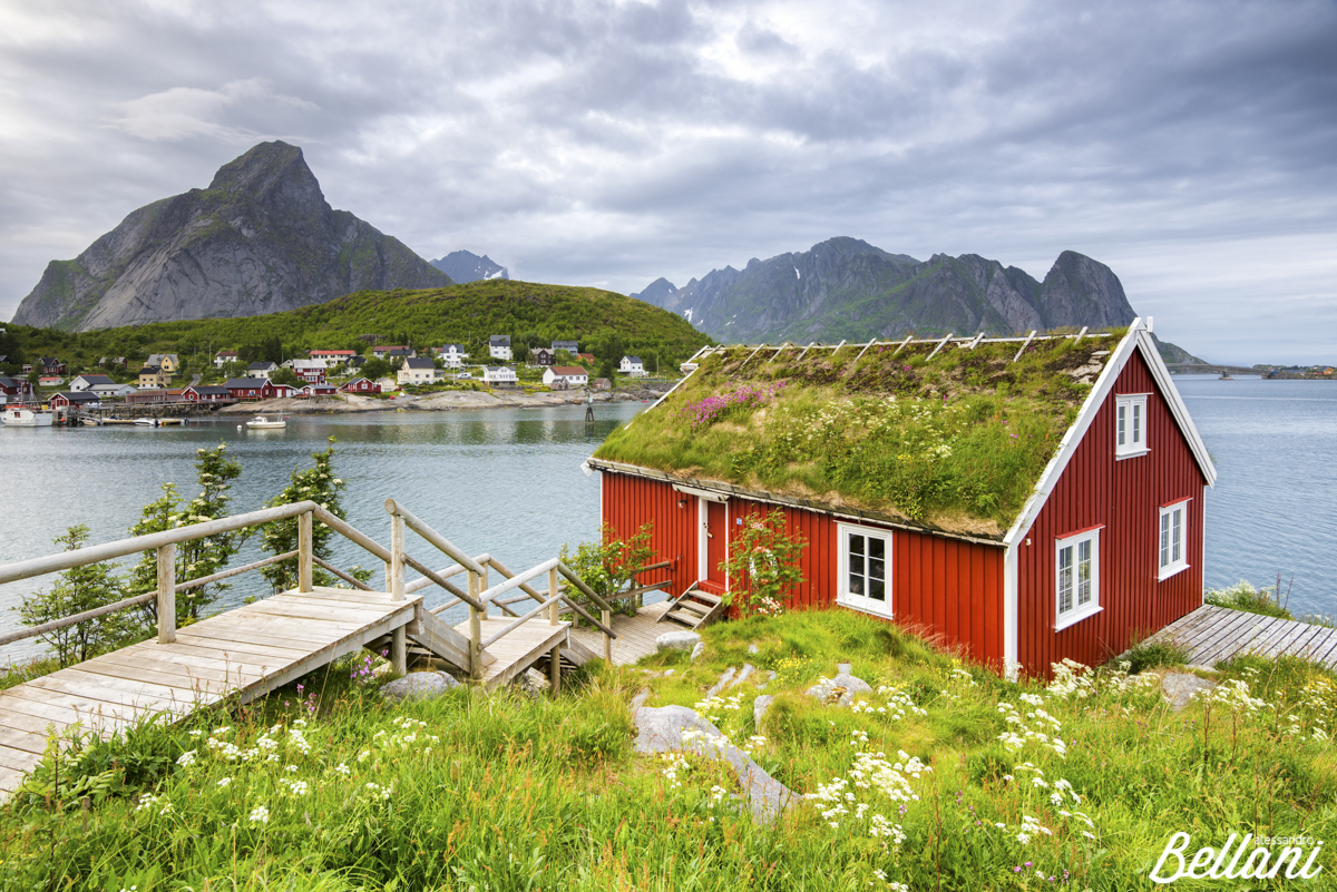 Green grass and flowers frame the typical Rorbu LOFOTEN ISLANDS