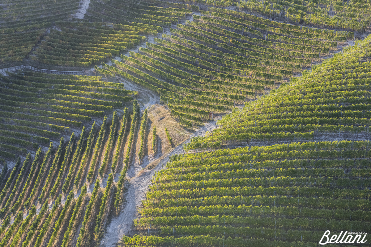 Langhe vineyards ITALY