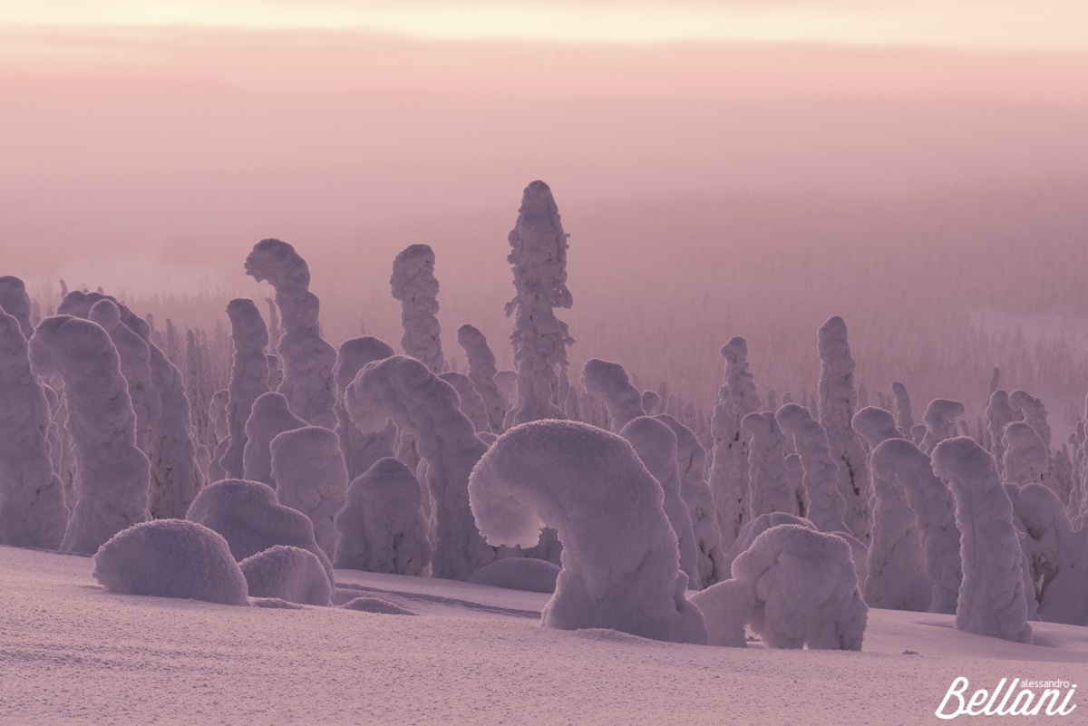 The frozen forest FINLAND