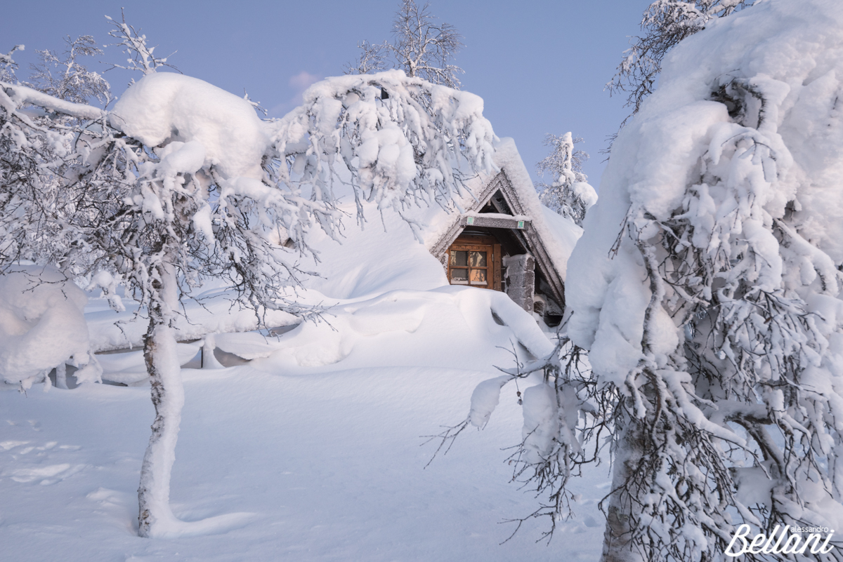 The house in woodland FINLAND