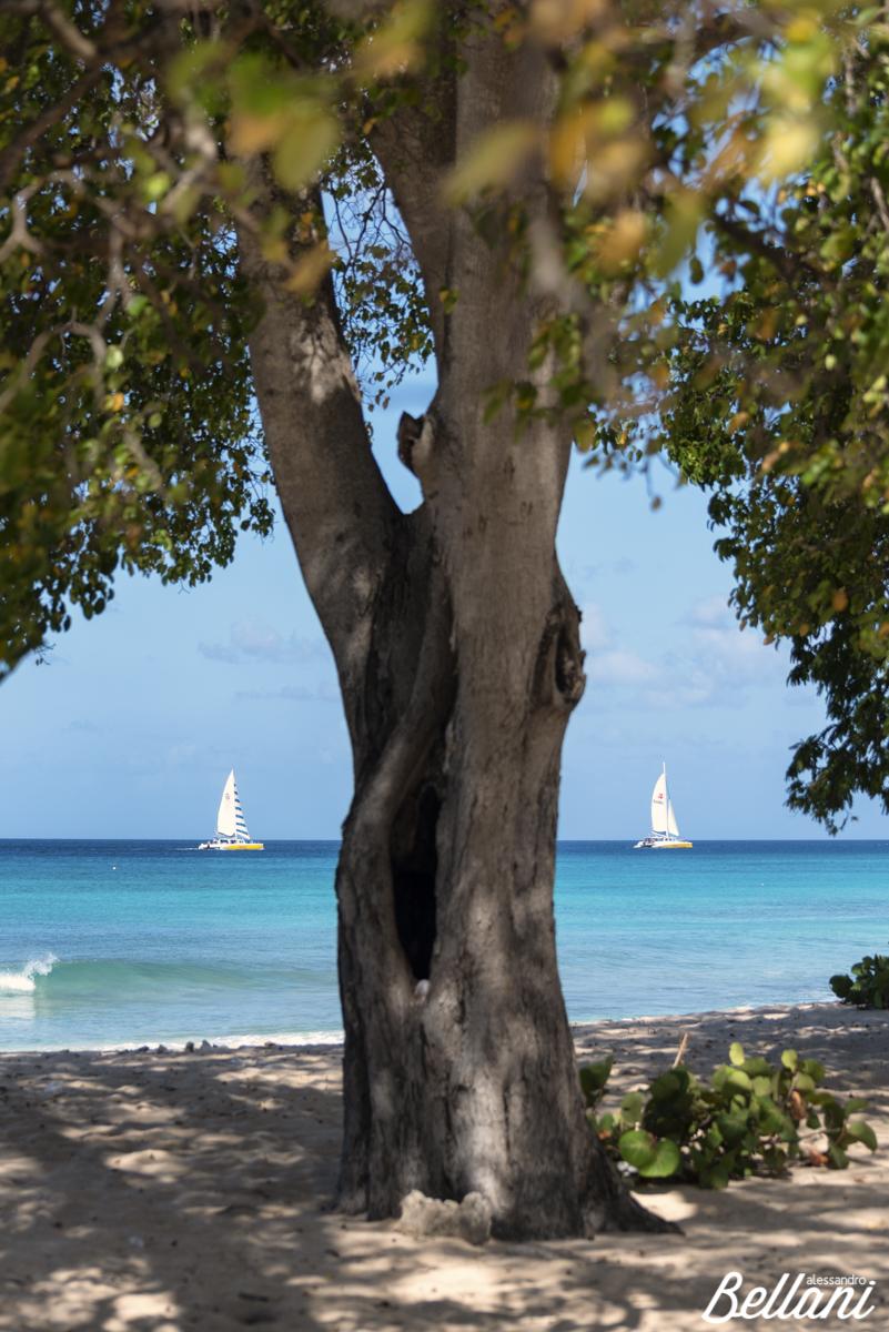 The sail boats BARBADOS ISLAND