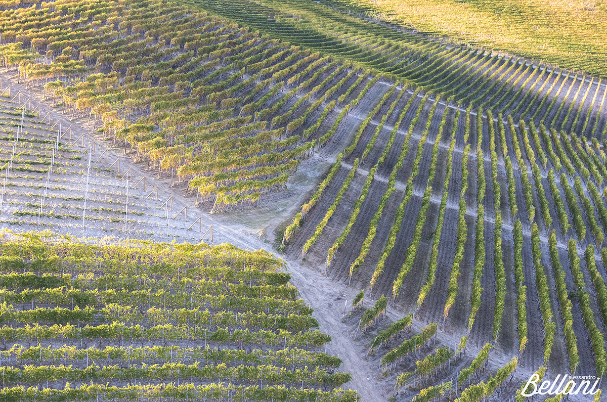 The vineyards of the Langhe